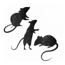 Zestaw 9 szczurów